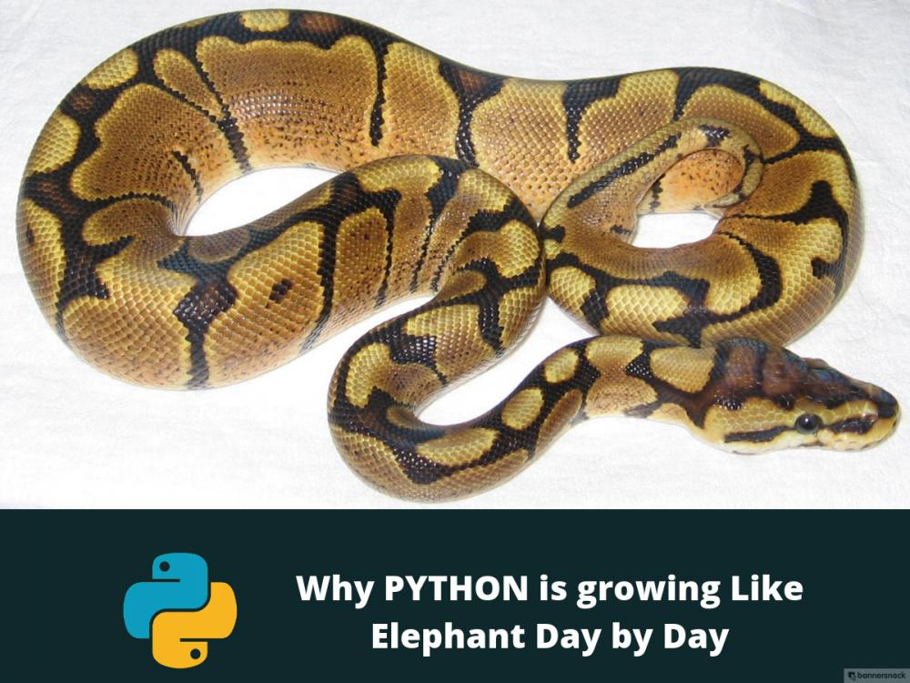 Python popularity: Why and how PYTHON is growing Like Elephant -...